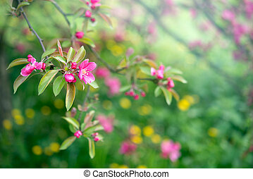 Spring nature background with pink blossom flower