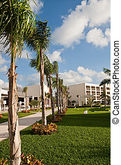Line of Palm Trees Beside Tropical Sidewalk - A line of palm...