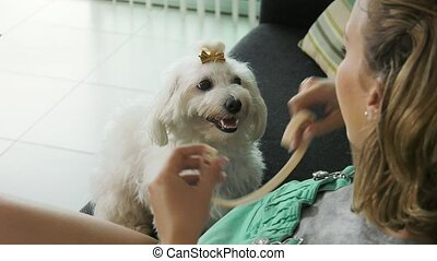 14-Woman Dog Owner Putting Flea Collar To Pet