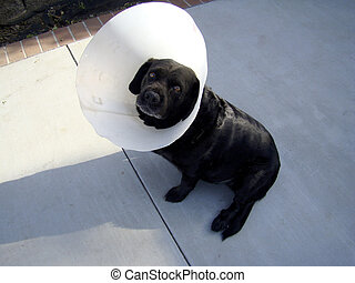 Lampshade Dog