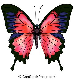 Butterfly Vector illustration of beautiful red butterfly...