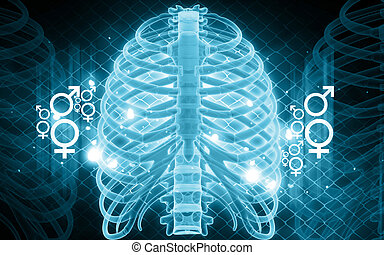 human rib - Digital illustration of human rib in color...