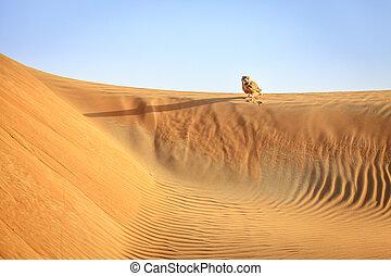 Desert Eagle Owl sitting on a dune in Dubai Desert...