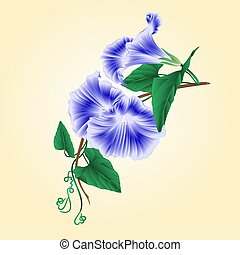 Flower Morning glory blue vector.eps - Flower Morning glory...