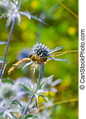 bee pollinating a flower. Green nature background