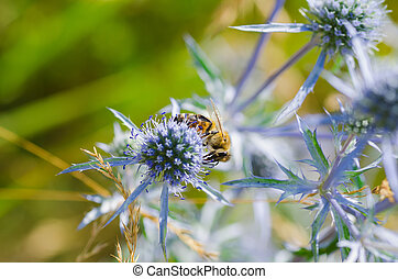 bee pollinating a flower. Green nature backgrounds