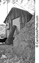 Old Shack - black and white photo of a old shack and a black...