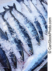 wild sockeye - Wild sockeye salmon for sale in ice