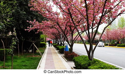 pavement with cherry blossom 2