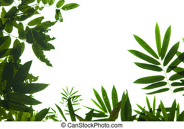 Leaf border - Natural green leaf border against white...