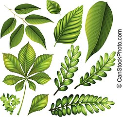 Different kind of leaves illustration