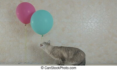 Funny naughty cat gnaws rope from balloon. - Funny naughty...
