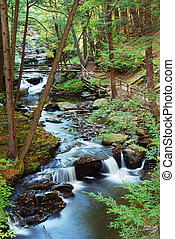 Forest CREEK WITH HIKING TRAILS - Forest Creek with wood...