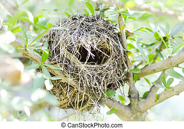 bird nest on terminalia ivoriensis tree