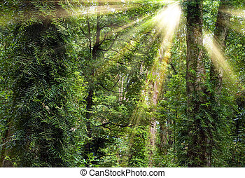 sunshine through trees in rain forest