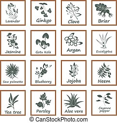 Collection of Ayurvedic Herbs. Labels for Essential Oils and...