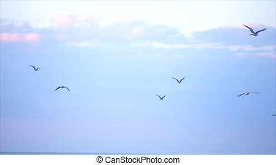 Seagulls fly over the sea. Flock of seagulls flying over sea.