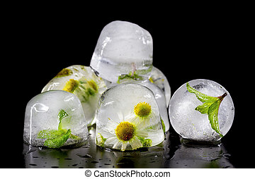Flowers of chamomile and mint leaves frozen in ice. Isolate...