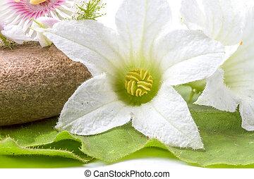 the granadilla flower - several boulders and granadilla...