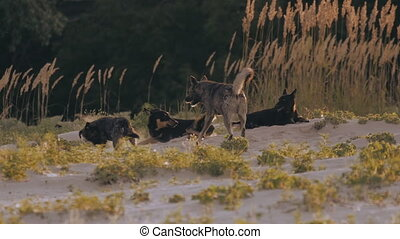 a pack of stray dogs in the wild nature