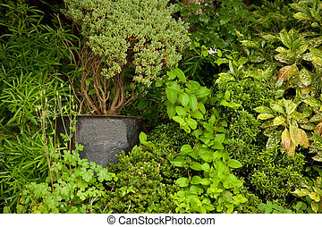 shrubbery - background of shrubbery and potted plants