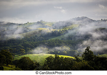 Atherton Tablelands on a Misty Morning - Atherton Tablelands...