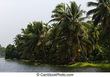Allepey city on water. Backwater, rice plantation, coconuts palm mango tree. River landscape