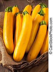 Raw Organic Yellow Zucchini Squash Ready to Cut Up