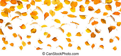 Autumn falling leaves
