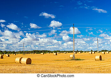 Stacks of straw - bales of hay, rolled into stacks left...