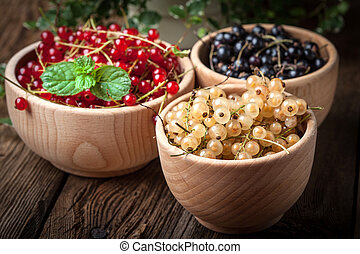 Redcurrant, blackcurrant, white currant fruit. - Redcurrant,...