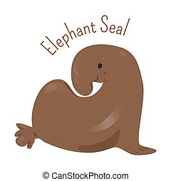 Elephant Seal isolated on white. Large, oceangoing earless...