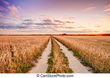 Rural Countryside Road Through Wheat Field Landscape Yellow...