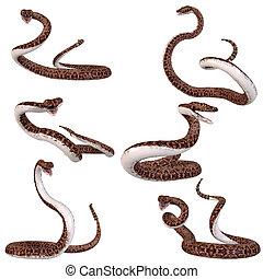 Snake-Rattlesnake - 3D Render of an Snake-Rattlesnake