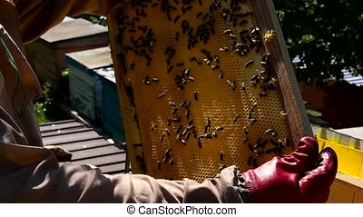 Bee-keeper gets honey frame from evidence.