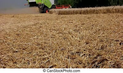 Harvester treshing wheat slow motion