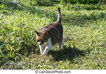 domestic cat in outdoor