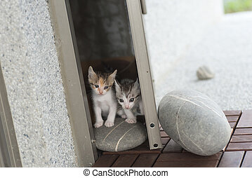 baby cat walk - little baby cat walk out from their home