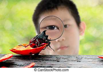 Asian kid with magnifying glass and Coleoptera outdoor.