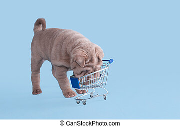 I haven\'t bought anything.... - Cute puppy of dogue de...