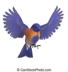 Bird Male Western Bluebird. 3D rendering with clipping path...