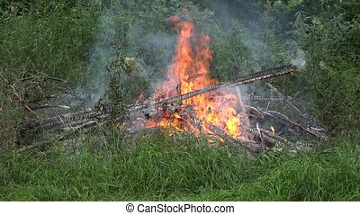 fire flames burn near forest trees on pond lake shore in...
