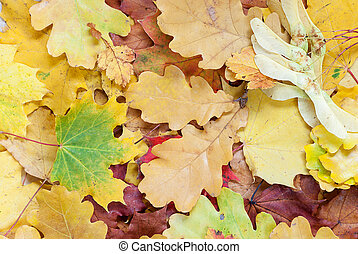 Background with multicolored leaves - Autumn background with...