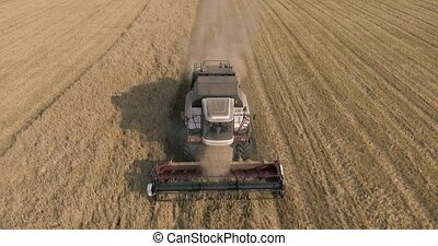 harvester on the wheat field
