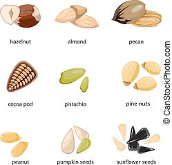 Seeds and nuts vector icons in cartoon style