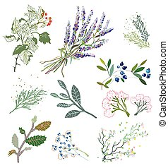 Herbs and plants for herbal medicine. Vector graphic...
