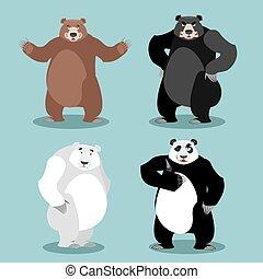 bears set Breed. Grizzly and panda. American black bear baribal. Polar. Different poses wild animal. Carnivorous animals