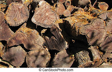 Kiawe Wood Pile - Kiawe wood pile, wood used in Hawaii for...