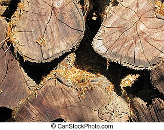 Kiawe Wood - Kiawe wood pile, wood used often in Hawaii for...