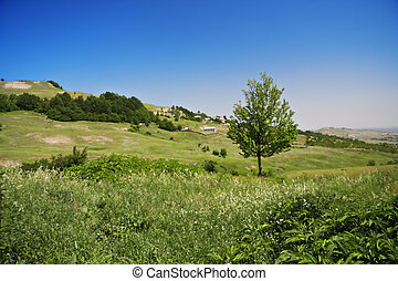 Rural scene with tree in a clear summer day